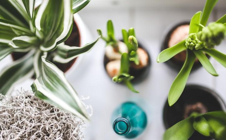 Photo of Вчені: Кімнатні рослини не люблять дотику
