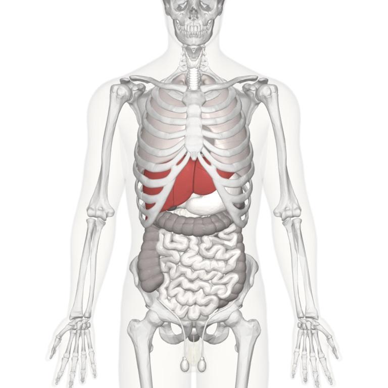 Photo of Експерти назвали зовнішні симптоми проблем з печінкою