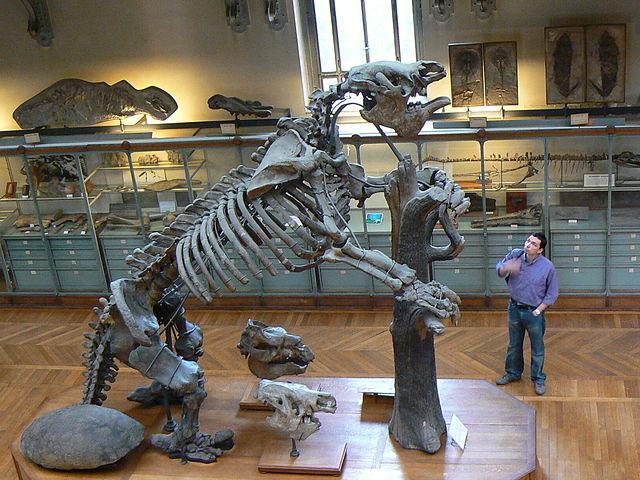 Photo of Вчені надали докази знищення людьми стародавніх гігантських лінивців