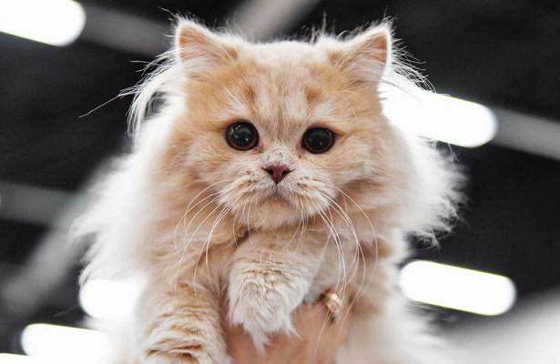 Photo of Кішка врятувала господарів від смерті