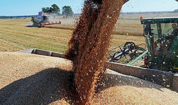 Photo of Засуха викликала глобальний дефіцит зерна в Європі