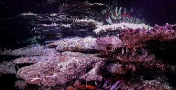 Photo of Величезні мінеральні вежі виявлені на дні океану
