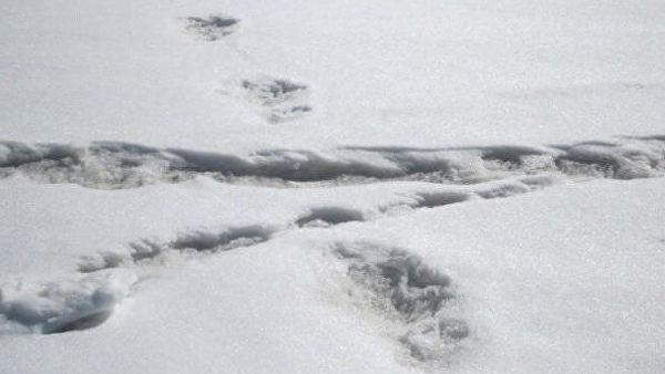 Photo of Військові припустили, кому належать знайдені в Гімалаях сліди «єті»