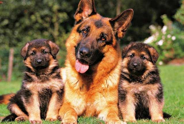 Photo of Деформації хребта собак пов'язали з одомашненням