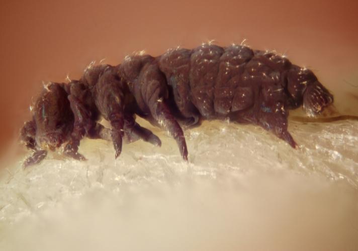 Photo of Вчені назвали живих істот, здатних пережити будь-який апокаліпсис