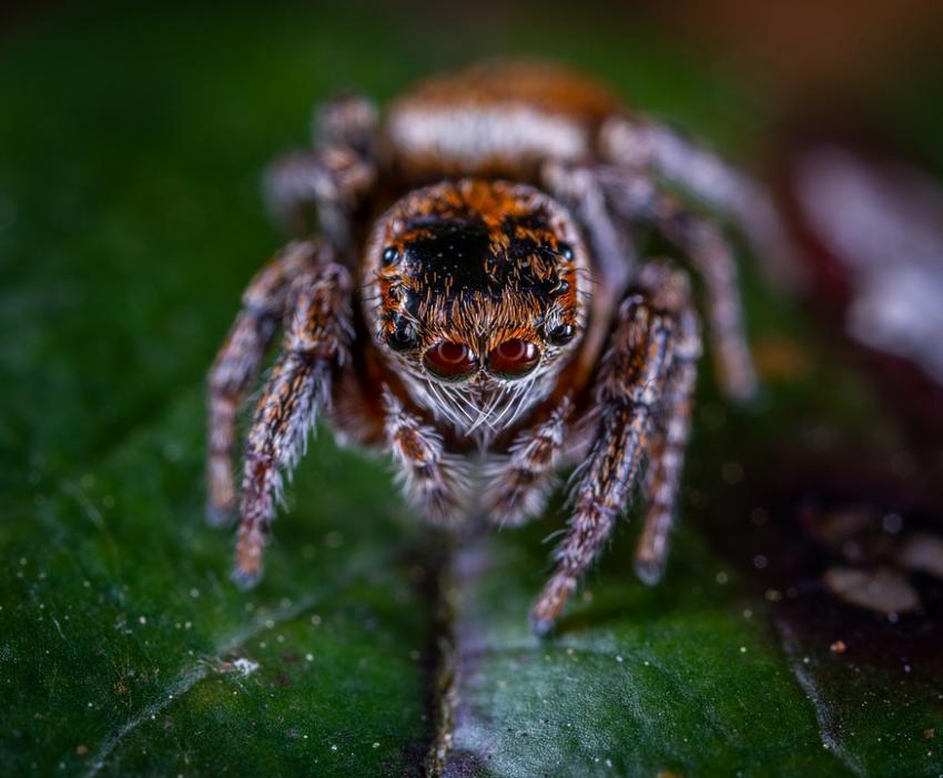 Photo of Глобальне потепління провокує поширення агресивних павуків