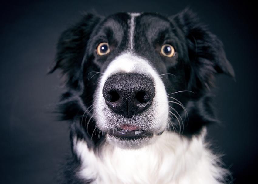 Photo of Вчені розвінчали головні міфи про собак