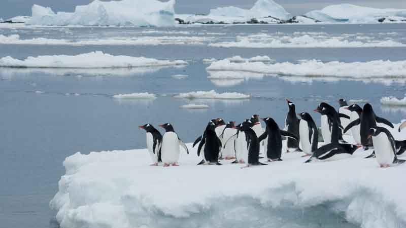 Photo of Льодовики Антарктиди стали танути швидше від арктичних