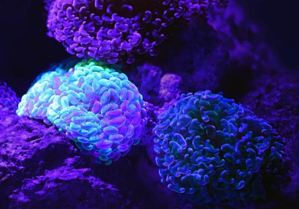 Photo of У США вперше виростили в лабораторії зникаючий вид коралів