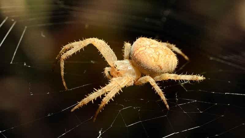 Photo of Урагани допомагають вижити тільки агресивним павукам
