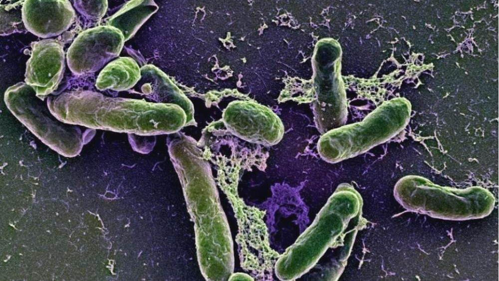 Photo of Бактерії вбивають відпочиваючих