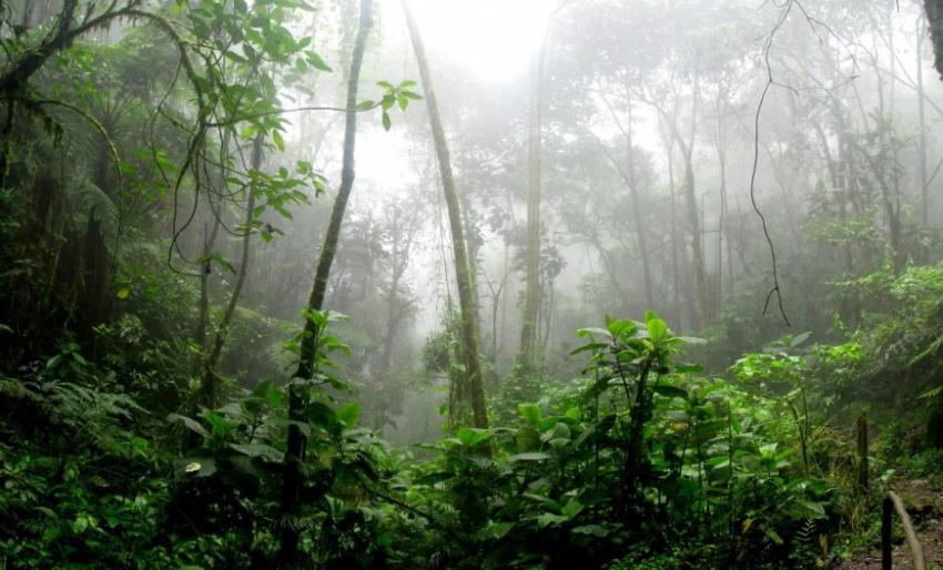 Photo of У лісах Амазонки виявили аномально високі дерева