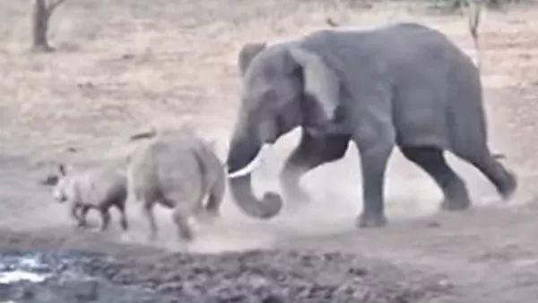 Photo of Жорстока бійка слона і носорога в ПАР потрапила на відео