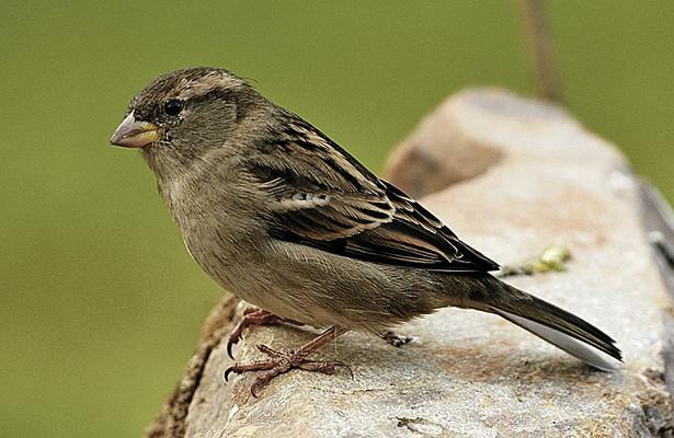 Photo of Почалося масове вимирання птахів