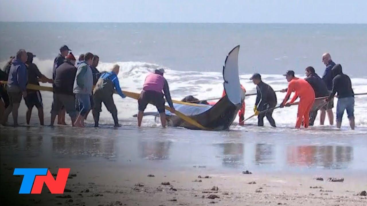 Photo of В Аргентині групу косаток викинуло на берег