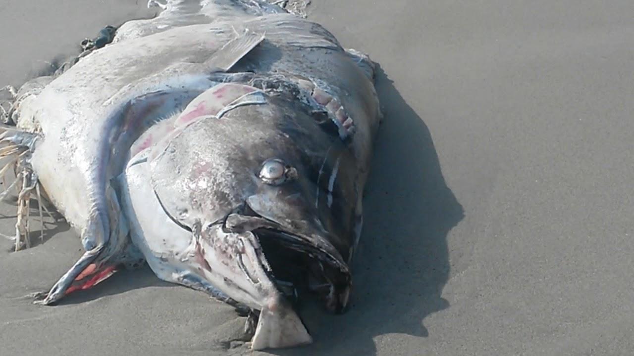 Photo of До берегів іспанській Мурсії прибило сотні мертвих тунців