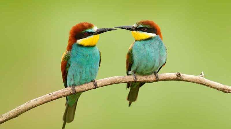 Photo of Клімат управляє розподілом популяцій птахів