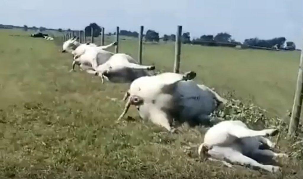 Photo of Удар блискавки вбив 23 корови в Техасі