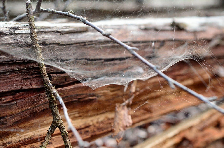 Photo of Композит павутини і деревини замінить синтетичний пластик