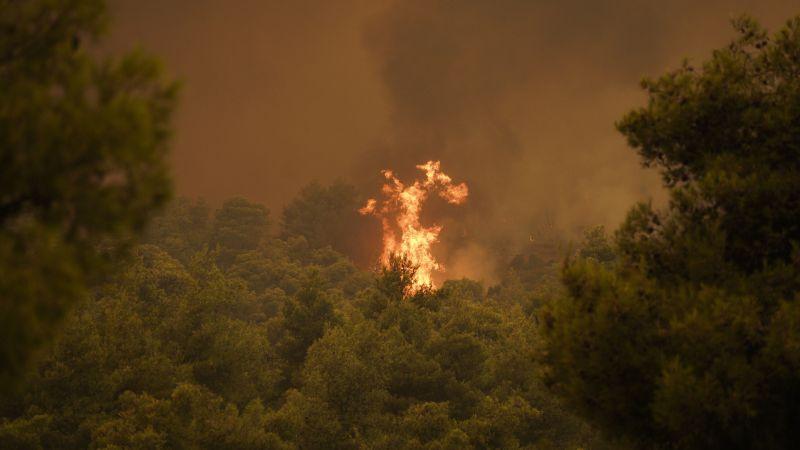 Photo of Розроблено «вакцина», що запобігає лісовим пожежам