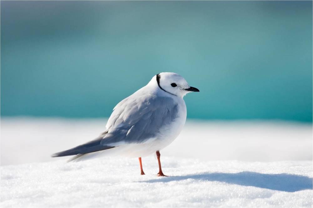 Photo of Сезон розмноження деяких птахів змінився з-за глобального потепління
