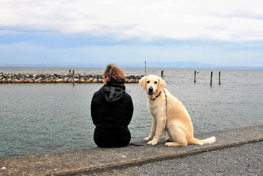 Photo of Вчені пов'язали наявність собаки в будинку зі збільшеною тривалістю життя