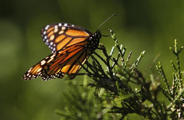 Photo of В Японії на 40% скоротилося число популяції метеликів