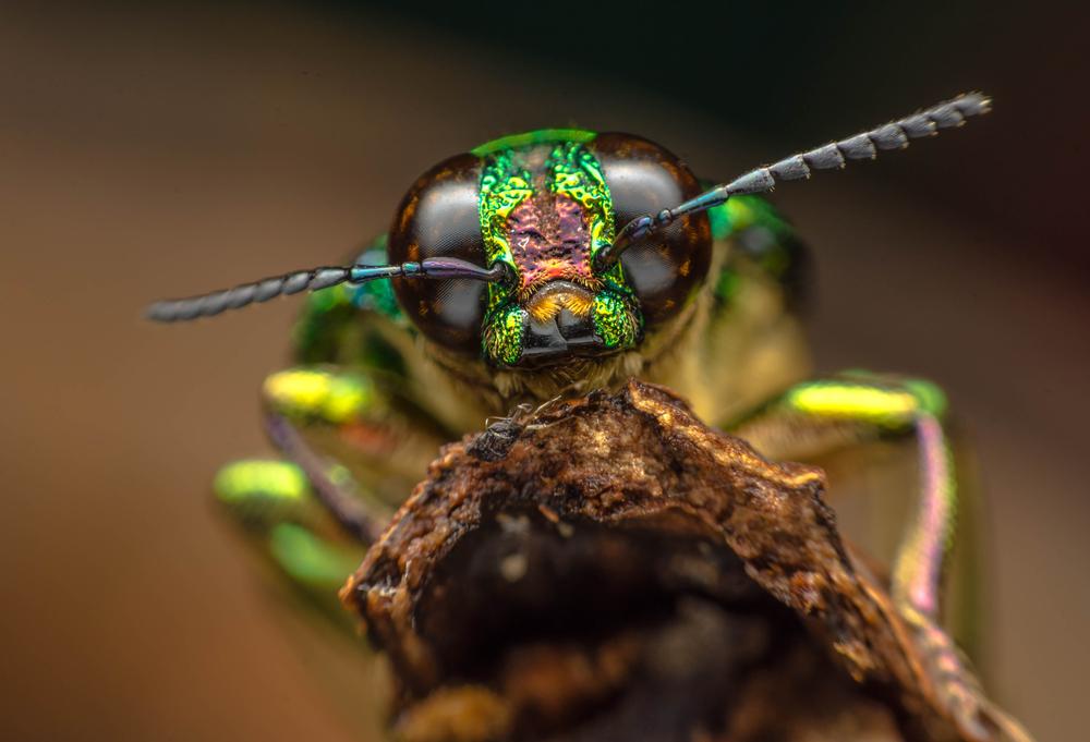 Photo of За 10 років на луках Німеччини вимерли дві третини всіх комах