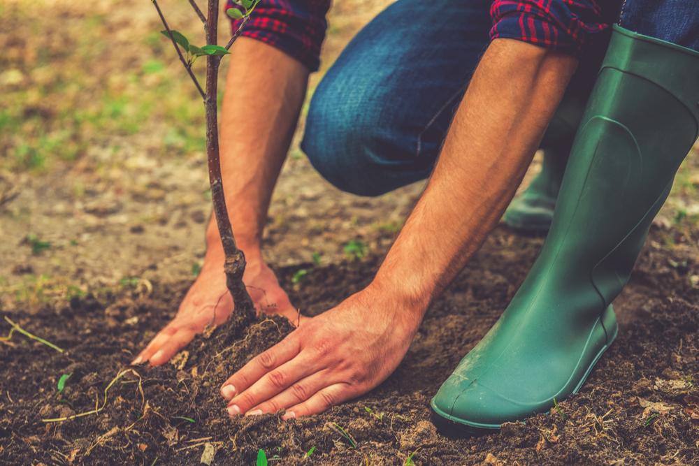 Photo of Нейронні мережі навчилися прогнозувати ріст рослин
