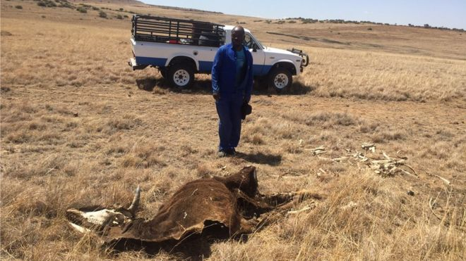 Photo of Південна Африка переживає найстрашнішу посуху за тисячу років