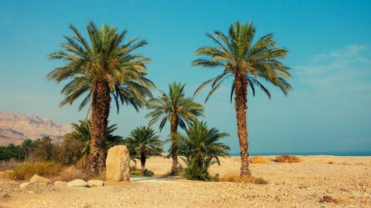 Photo of Пустельні рослини використовують секретну зброю, щоб витримати екстремальну спеку