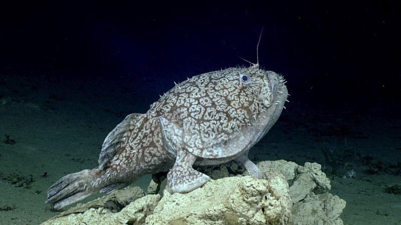 Photo of Вчені отримали рідкісне відео риби «з ногами»