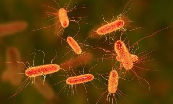 Photo of Вчені перекодовують бактерії, щоб вони почали харчуватися парниковими газами