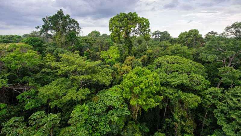 Photo of Ліси Амазонки не допоможуть зупинити потепління