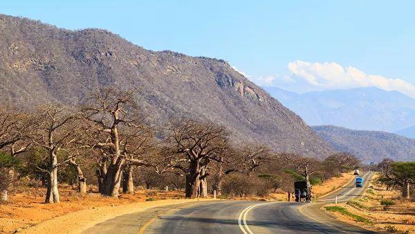 Photo of У Танзанії померла найстаріша самка чорного носорога