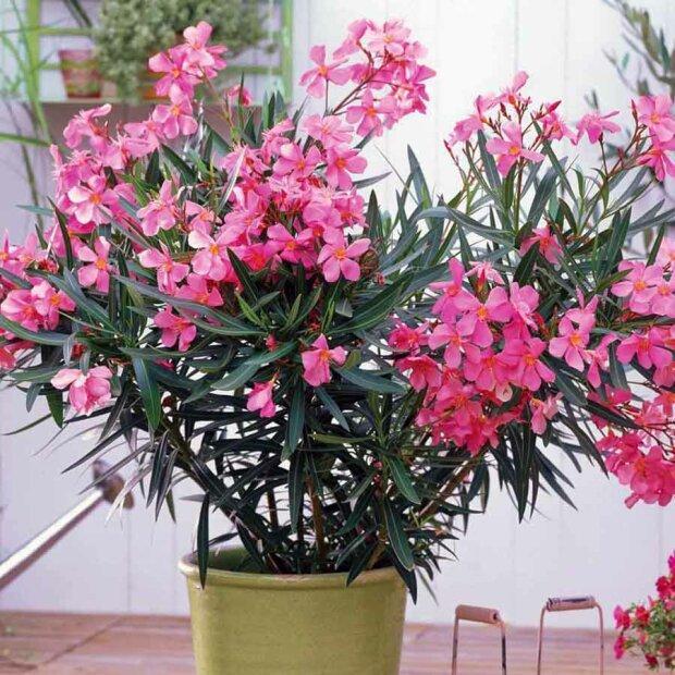Photo of Певні види домашніх рослин завдають непоправної шкоди здоров'ю людини