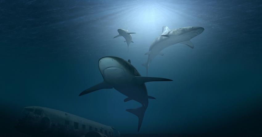 Photo of В Австралії триметрова біла «альфа-акула» загинула після нападу невідомої істоти