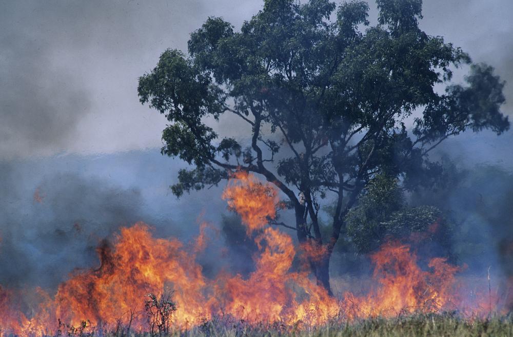 Photo of 2019 рік в Австралії став найбільш жарким і посушливим за всю історію метеоспостережень