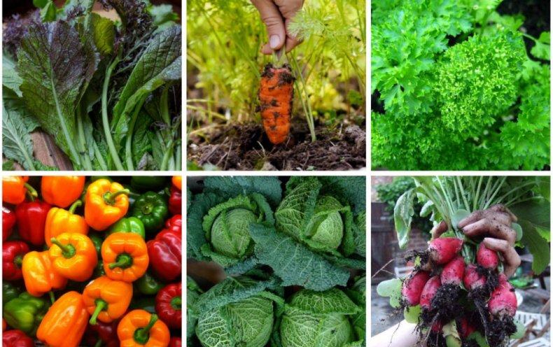 Photo of Що посадити на городі – корисні поради