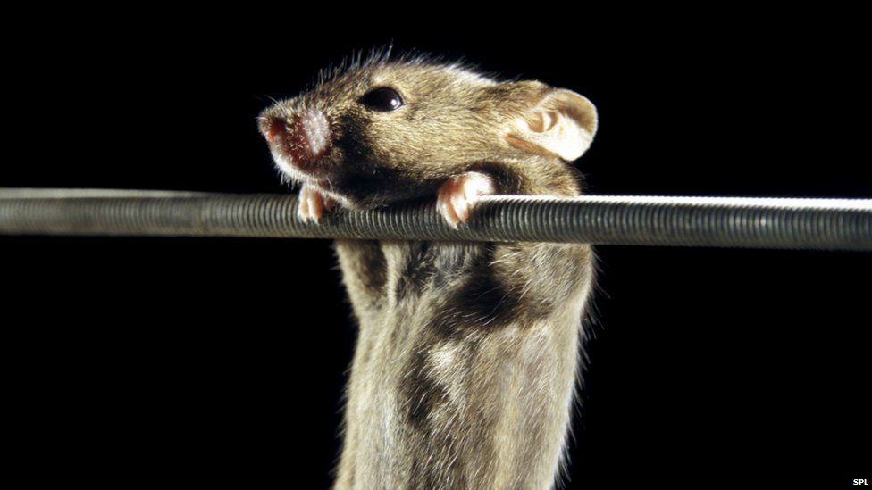 Photo of Виявлений білок, що дозволяє тваринам зберігати пружність м'язів без тренувань