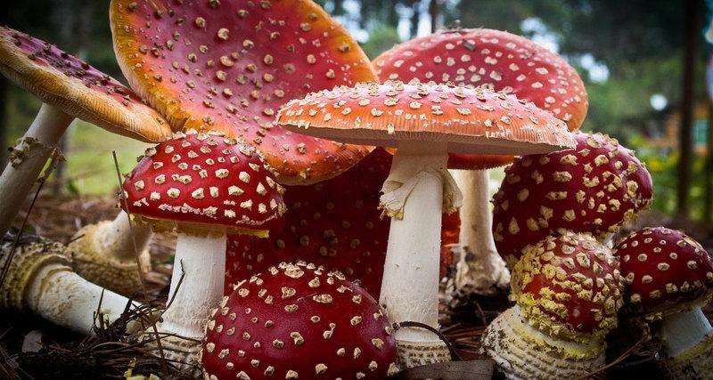Photo of З'ясовано вплив грибів на клімат