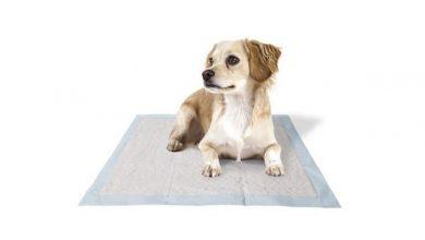 Photo of Пеленки для собак