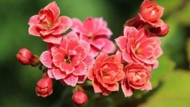 Photo of Медики розповіли про квіти, які підвищують імунітет