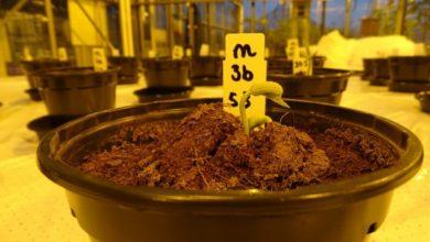 Photo of Сечу будуть використовувати для удобрення рослин на Марсі