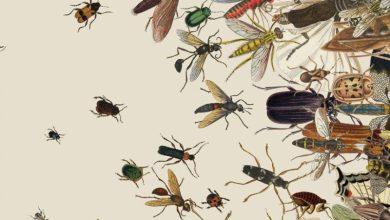 Photo of Учені попередили про небезпеку «апокаліпсису комах» для людства