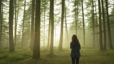 Photo of 10 хвилин щоденного перебування на природі допомагають знизити тривогу і занепокоєння