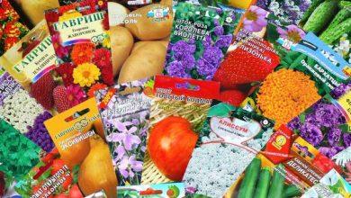 Photo of Якісний посівний матеріал — запорука гарного врожаю