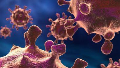Photo of Колонії людей і бактерій існують на одних і тих же принципах