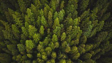 Photo of Дерева виділяють парникові гази і можуть прискорити глобальне потепління