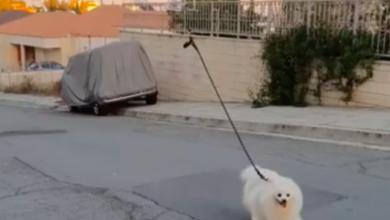 Photo of На відео показали, як дрон «вигулює» собаку